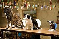 Das Hundehotel - Produktdetailbild 2