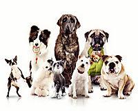 Das Hundehotel - Produktdetailbild 5