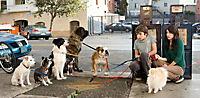 Das Hundehotel - Produktdetailbild 3