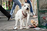 Das Hundehotel - Produktdetailbild 1