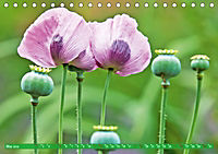 Das Jahr im Garten: Freude am Landleben (Tischkalender 2019 DIN A5 quer) - Produktdetailbild 5