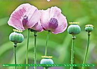 Das Jahr im Garten: Freude am Landleben (Wandkalender 2019 DIN A2 quer) - Produktdetailbild 5