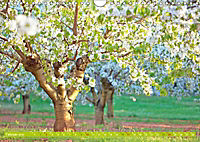 Das Jahr im Garten: Freude am Landleben (Wandkalender 2019 DIN A4 quer) - Produktdetailbild 2