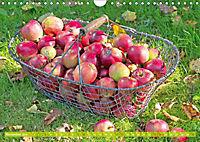 Das Jahr im Garten: Freude am Landleben (Wandkalender 2019 DIN A4 quer) - Produktdetailbild 11