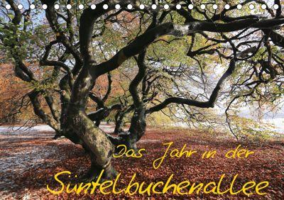 Das Jahr in der Süntelbuchenallee (Tischkalender 2019 DIN A5 quer), Bernhard Loewa