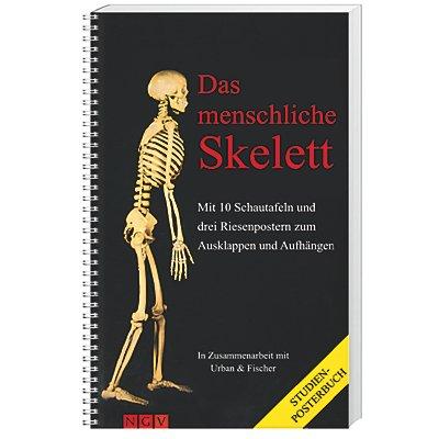 Das menschliche Skelett, Studien-Posterbuch Buch - Weltbild.at