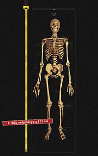 Das menschliche Skelett, Studien-Posterbuch - Produktdetailbild 3