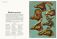 Das Museum der Dinosaurier - Produktdetailbild 5