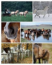Das Pferdebuch - Produktdetailbild 4