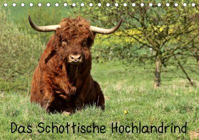 Das Schottische Hochlandrind (Tischkalender 2019 DIN A5 quer), Christine Schmutzler-Schaub