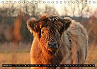 Das Schottische Hochlandrind (Tischkalender 2019 DIN A5 quer) - Produktdetailbild 2