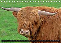 Das Schottische Hochlandrind (Tischkalender 2019 DIN A5 quer) - Produktdetailbild 8