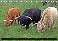 Das Schottische Hochlandrind (Tischkalender 2019 DIN A5 quer) - Produktdetailbild 6