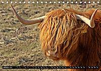 Das Schottische Hochlandrind (Tischkalender 2019 DIN A5 quer) - Produktdetailbild 10