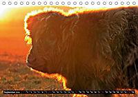 Das Schottische Hochlandrind (Tischkalender 2019 DIN A5 quer) - Produktdetailbild 9