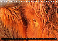 Das Schottische Hochlandrind (Tischkalender 2019 DIN A5 quer) - Produktdetailbild 12