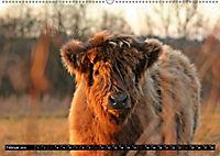 Das Schottische Hochlandrind (Wandkalender 2019 DIN A2 quer) - Produktdetailbild 2
