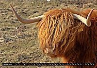 Das Schottische Hochlandrind (Wandkalender 2019 DIN A2 quer) - Produktdetailbild 10