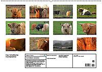 Das Schottische Hochlandrind (Wandkalender 2019 DIN A2 quer) - Produktdetailbild 13