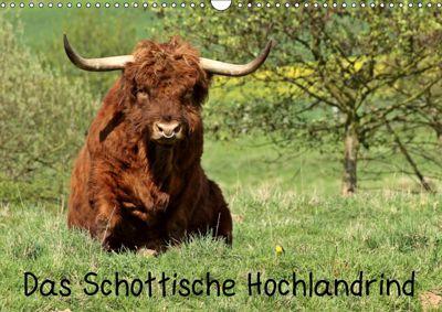 Das Schottische Hochlandrind (Wandkalender 2019 DIN A3 quer), Christine Schmutzler-Schaub