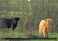 Das Schottische Hochlandrind (Wandkalender 2019 DIN A3 quer) - Produktdetailbild 3