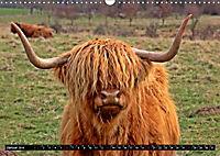 Das Schottische Hochlandrind (Wandkalender 2019 DIN A3 quer) - Produktdetailbild 1