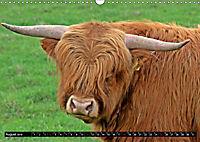 Das Schottische Hochlandrind (Wandkalender 2019 DIN A3 quer) - Produktdetailbild 8