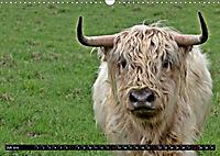 Das Schottische Hochlandrind (Wandkalender 2019 DIN A3 quer) - Produktdetailbild 7