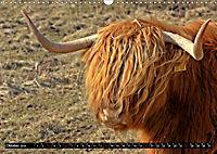 Das Schottische Hochlandrind (Wandkalender 2019 DIN A3 quer) - Produktdetailbild 10