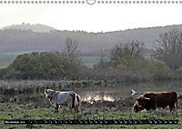 Das Schottische Hochlandrind (Wandkalender 2019 DIN A3 quer) - Produktdetailbild 11