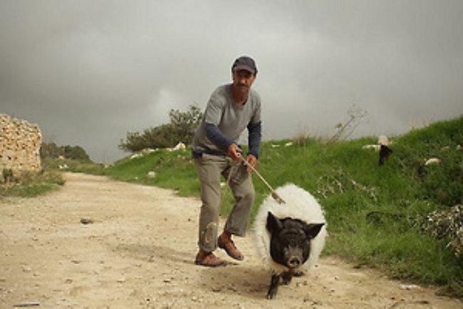 Резултат со слика за das schwein von gaza