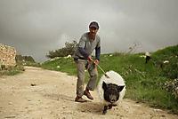 Das Schwein von Gaza - Produktdetailbild 1