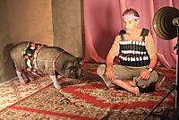 Das Schwein von Gaza - Produktdetailbild 4