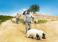 Das Schwein von Gaza - Produktdetailbild 2