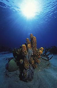 Das Universum der Ozeane - Produktdetailbild 7