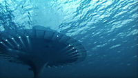 Das Universum der Ozeane - Produktdetailbild 4