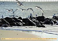 Das Wattenmeer - 2019 (Wandkalender 2019 DIN A4 quer) - Produktdetailbild 6