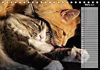Das wunderbare Sein (Tischkalender 2019 DIN A5 quer) - Produktdetailbild 3