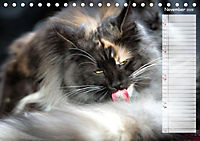 Das wunderbare Sein (Tischkalender 2019 DIN A5 quer) - Produktdetailbild 11