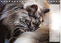 Das wunderbare Sein (Tischkalender 2019 DIN A5 quer) - Produktdetailbild 8