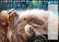 Das wunderbare Sein (Tischkalender 2019 DIN A5 quer) - Produktdetailbild 4