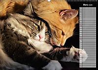 Das wunderbare Sein (Wandkalender 2019 DIN A2 quer) - Produktdetailbild 3