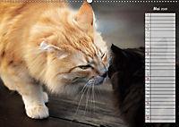 Das wunderbare Sein (Wandkalender 2019 DIN A2 quer) - Produktdetailbild 5
