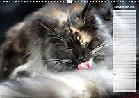 Das wunderbare Sein (Wandkalender 2019 DIN A3 quer) - Produktdetailbild 11