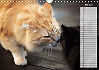 Das wunderbare Sein (Wandkalender 2019 DIN A4 quer) - Produktdetailbild 5