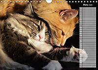 Das wunderbare Sein (Wandkalender 2019 DIN A4 quer) - Produktdetailbild 3