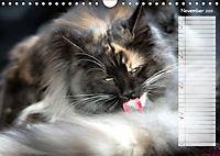 Das wunderbare Sein (Wandkalender 2019 DIN A4 quer) - Produktdetailbild 11