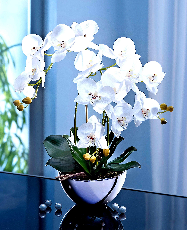 Deko Orchidee Im Design Topf Jetzt Bei Weltbild Ch Bestellen