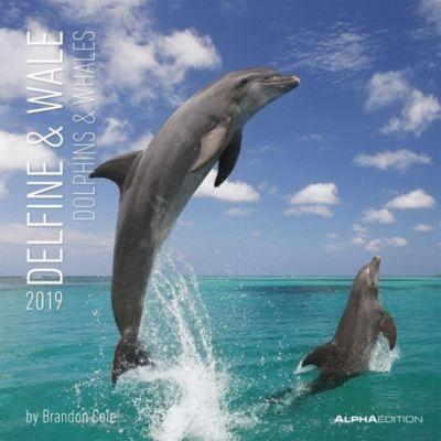 Delfine & Wale 2019, Brandon Cole