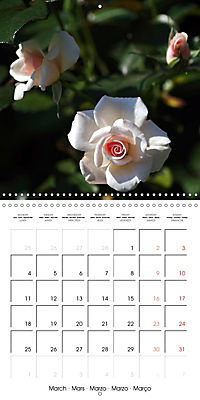 Delicate Beauties - Magnificent Roses (Wall Calendar 2019 300 × 300 mm Square) - Produktdetailbild 3